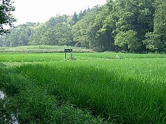 yatsu717.jpg