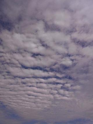 鱗状の雲が南から北へ流れて行く